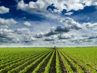How The IoT Is Helping The Farming Industry