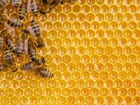 How IoT Tech is Saving Honey Bees